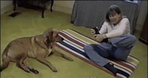 Joga z psem