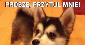 Proszę, przytul mnie!