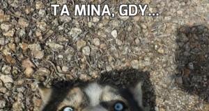 Ta mina, gdy...