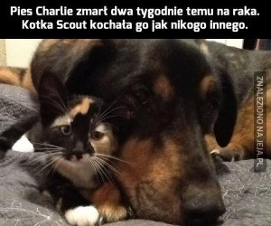Jak pies z kotem... chlip!