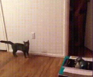 Jak nastraszyć kota?