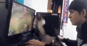 Ja chcę grać! Daj mi grać!