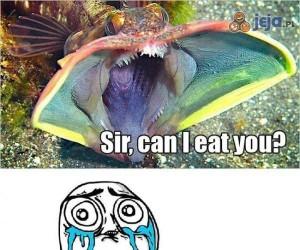 Czy mogę Cię zjeść?