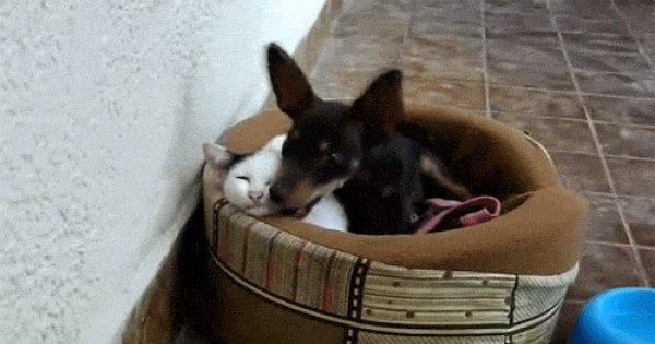 Гифки собака и кошка