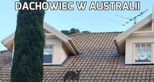 Dachowiec w Australii