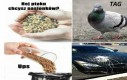 Ptaszor się wkurzył