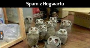 Sowi spam