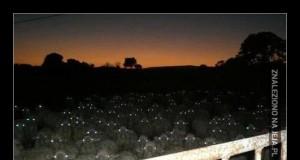 Czasami nawet pasterz