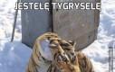 Jestełę tygrysełę