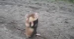 Wyjątkowo agresywny chomik