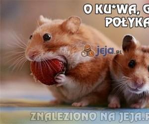 O ku*wa, gliny!