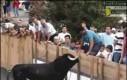 Nie drażnij byka