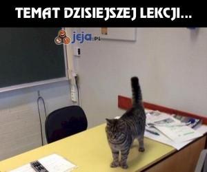 Profesor Kot naucza