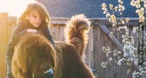 Przyjaźń pomiędzy chłopcem, dwoma wielkimi psami i koniem