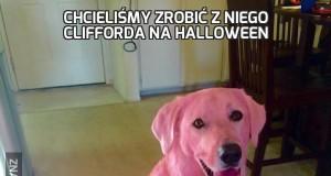 Chcieliśmy zrobić z niego Clifforda na Halloween