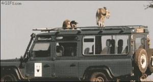 Gepard i jego zdanie o turystach