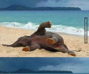 Mały słonik pierwszy raz na plaży