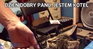 Dzień dobry panu, jestem koteł