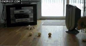 Pojemny pies