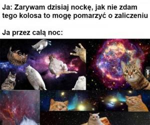 Miała być nauka, były koty