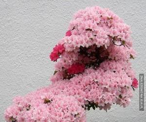 Wiśniowe drzewko bonsai