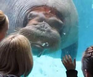 Jakiś dziwny ten hipopotam