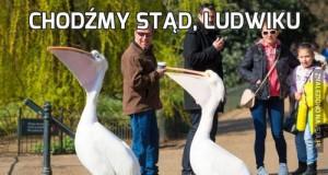 Chodźmy stąd, Ludwiku