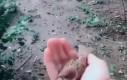 Ptasi magnes