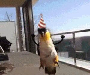 Bardzo radosna papużka