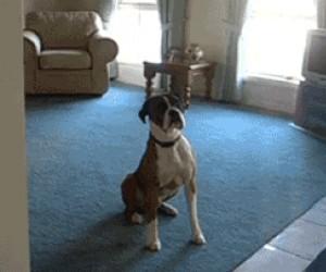 Entuzjastyczny pies