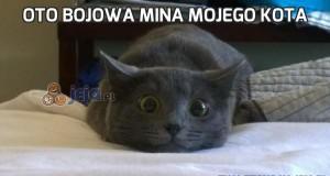Oto bojowa mina mojego kota