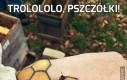 Trolololo, pszczółki!