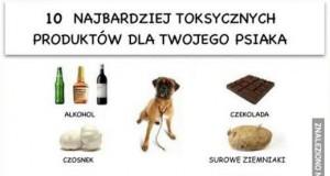 Dziesięć najbardziej toksycznych produktów dla Twojego psiaka