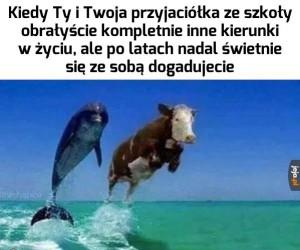Uzupełniamy się, jak krowa i delfin