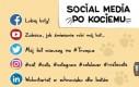 Social media po kociemu