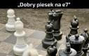 Piesek szachista