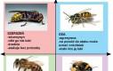 Kompas polityczny pasiastych owadów