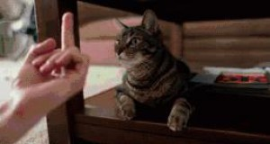 Jak zwierzęta reagują na ten gest?