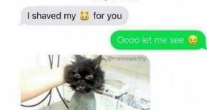 A jak tam Wasze kotki?