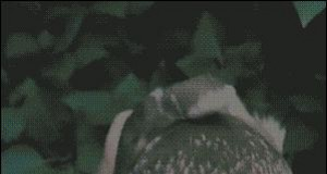 Niewzruszona sowa