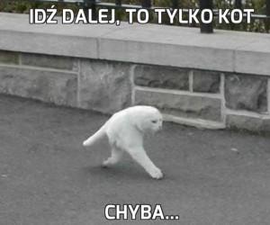 Idź dalej, to tylko kot