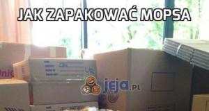 Jak zapakować mopsa