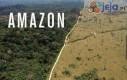 Skutki wycinki lasów amazońskich
