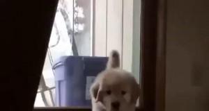 Pies z miłości dla pana przeszedł przez lawę