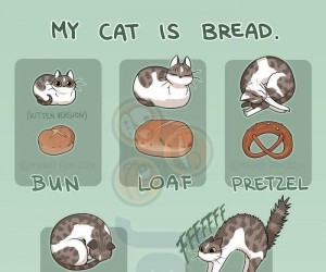 Mój kot jest chlebem
