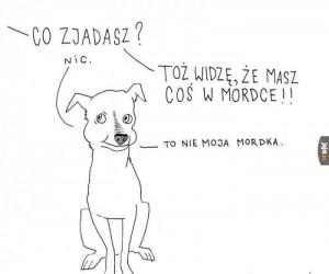 Psie sucharki