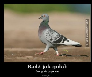 Bądź jak gołąb