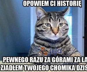 Kot opowiada historię