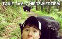 Takie tam, z niedźwiedziem