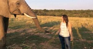 Buziak od słonia